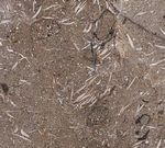 Petra Fossil Marble (Оман)